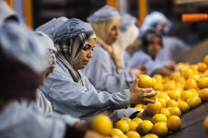 FAO and WTO: Food safety and trade should improve nutrition and boost development